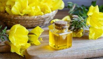 Pupalka dvouletá – přírodní poklad pro ženské zdraví