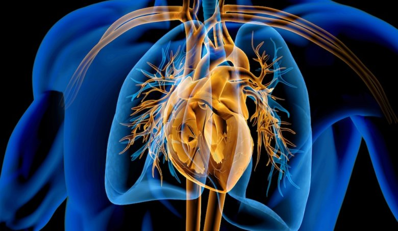 Jak uchovat srdce a cévy zdravé?